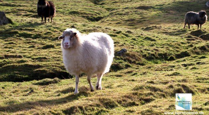 Ind i bibelen: 1 Silence of the lambs