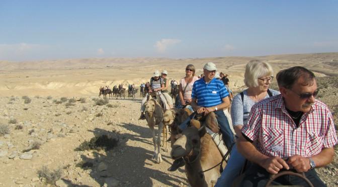 Bornholmere red på kameler i Negev-ørkenen
