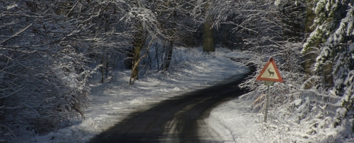 Program for vinterstævne